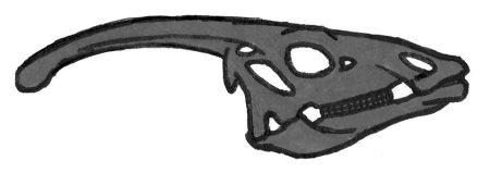 Dinosaurs - Parasaurolophus head
