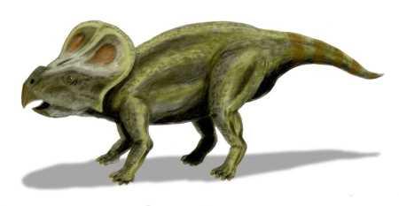 Protoceratops - Dinosaur Facts for Kids