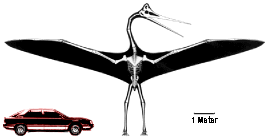 Quetzalcoatlus Flying Reptile Size