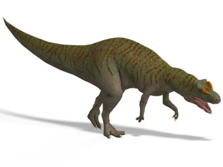 Allosauarus Dinosaur