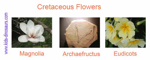 Cretaceous Plants - Flowers