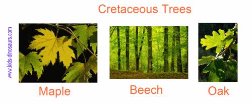 Cretaceous Plants - Trees