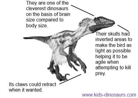 Velociraptor Quick Facts Deinonychus Facts for ...