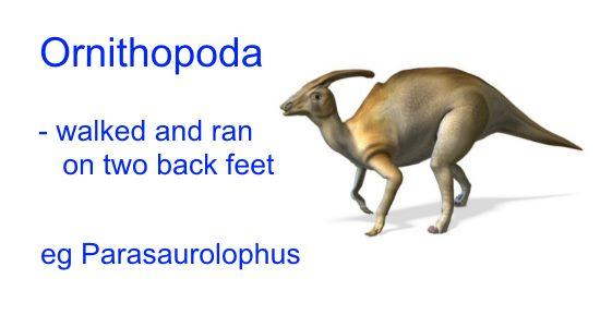 Different Types of Dinosaurs - Ornithopoda