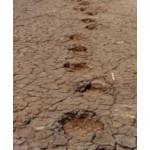 Dinosaur footprints
