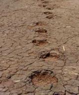 Sauropod Tracks Dinosaur footprints