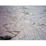 Dinosaur footprints at Pegadas