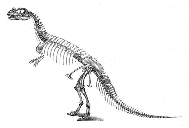 dinosaur skeleton picture of ceratosaurus