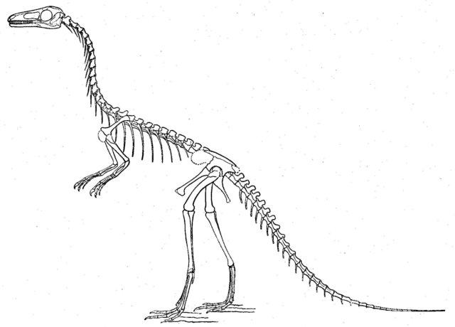 dinosaur skeleton picture of ceratosaurus dinosaur skeleton picture of compsognathus