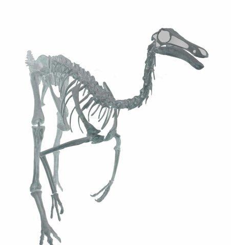 Dinosaur Skeleton Pictures
