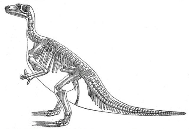 Free Coloring Pictures Of Dinosaurs : Dinosaur skeleton pictures
