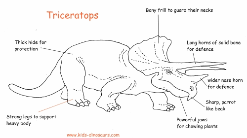 Dinosaurs Triceratops - Facts about the Triceratops Dinosaur.