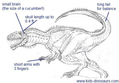 dinosaur facts and coloring pages - photo#32