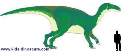 How big were Iguanodon