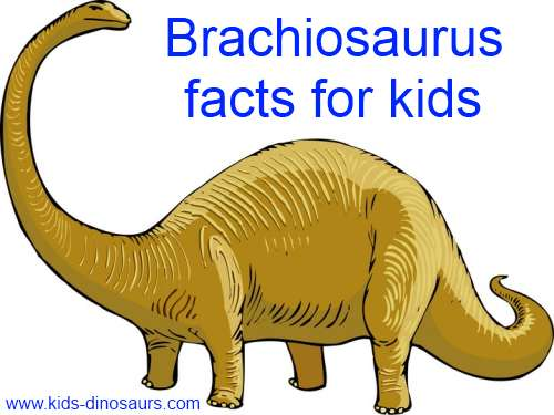 Brachiosaurus Facts for Kids