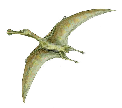 Flying Dinosaurs Facts For Kids