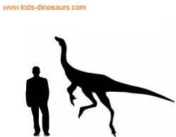 ornithomimus size