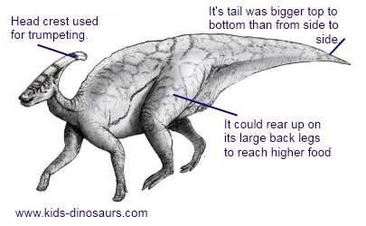 Parasaurolophus Dinosaur Facts