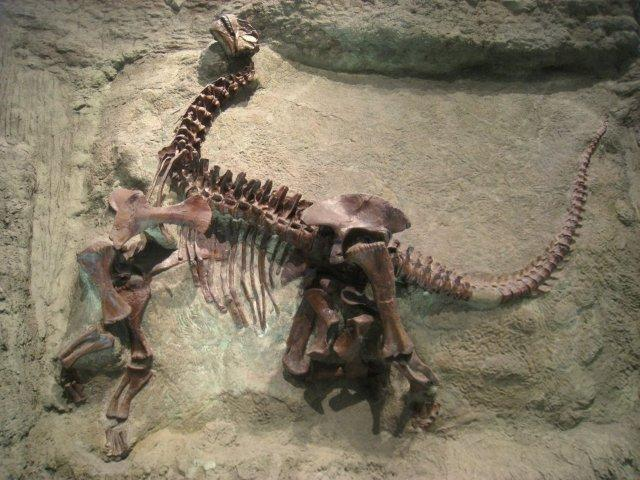 Pictures of Dinosaur Fossils