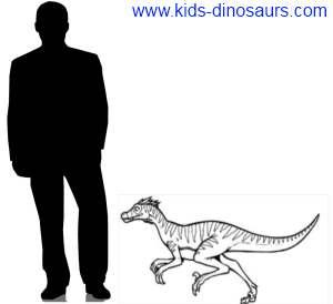 Velociraptors Size