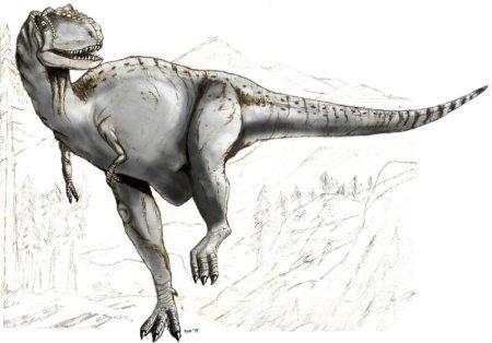 Dinosaurs - Albertosaurus