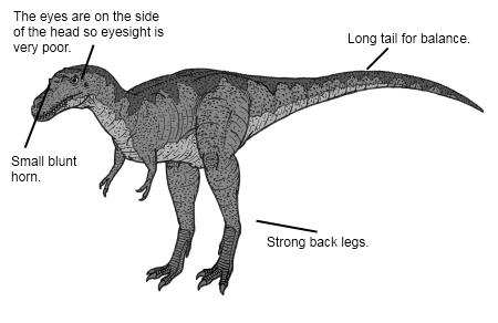 Albertosaurus Dinosaur Facts