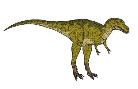Albertosaurus Dinosaur