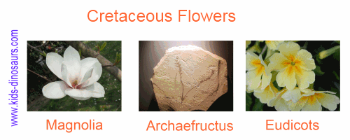 Cretaceous Plants - Flowers