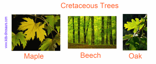 Cretaceous Plants - Trees