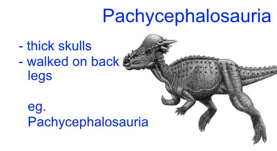 Different Types of Dinosaurs - Pachycephalosauria