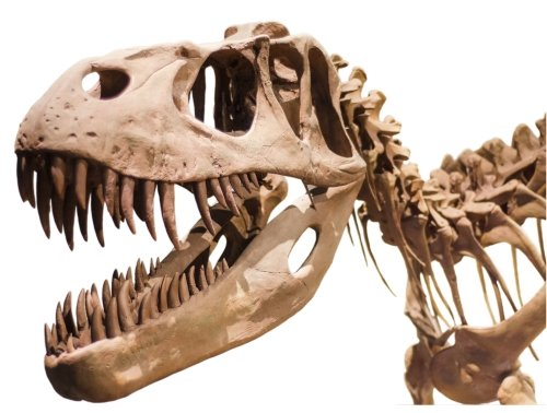 Learn about different dinosaurs types