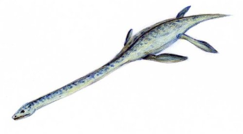 Elasmosaurus Facts fo rKids