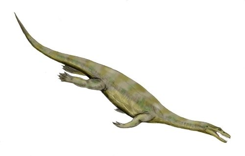 Nothosaurus Facts for Kids