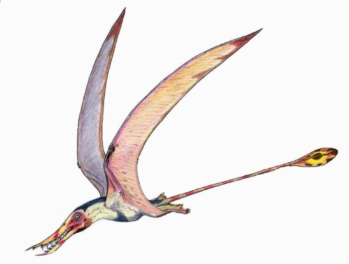 Rhamphorhynchus Facts for Kids