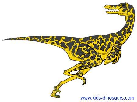 Velociraptors Dinosaur Pictures